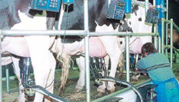 Uruguay: subieron 24% exportaciones lácteas