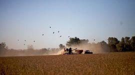 El agro fue clave: con el complejo soja como protagonista, enero dejó un superavit comercial de US$ 1068 millones