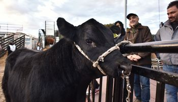 Ingresa el primer animal a La Rural