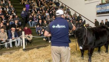 La ganadería, en un buen momento para invertir