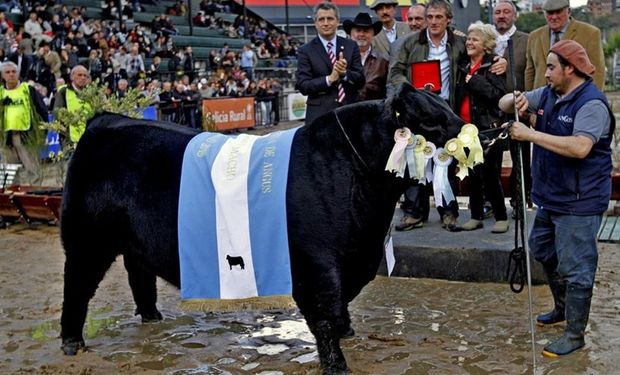Las juras de las razas bovinas, lo más esperado.