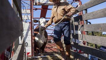 En la cuenta regresiva para las PASO, arranca la Exposición Rural