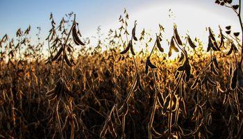 El conflicto en Medio Oriente presiona a la soja a la baja en Chicago