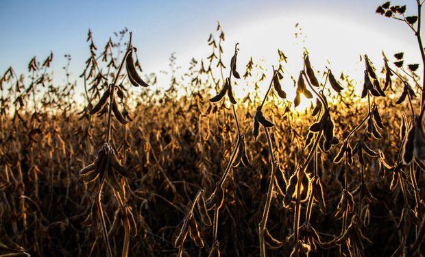 Mercado atento al conflicto en Medio Oriente y a los reportes del Departamento de Agricultura de Estados Unidos (USDA).