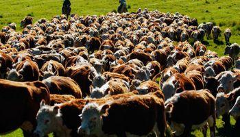 Presente y futuro de la ganadería en Argentina