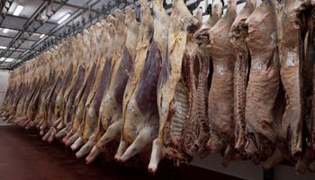 Carne: por menor oferta de hacienda y paros, la faena de enero fue una de las más bajas en 42 años