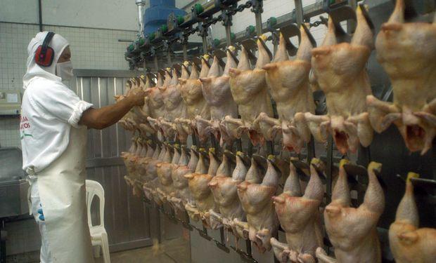 Según informaron, se generarán puestos de trabajo para el 100% del personal cuando la faena diaria alcance los 400.000 pollos.