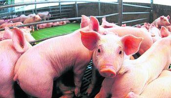 Carne de cerdo cerca del autoabastecimiento