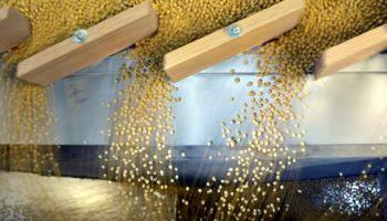 La demanda china de poroto de soja argentino es la segunda más alta del año