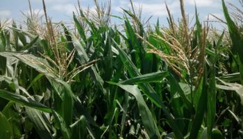 Faltan lluvias para los cultivos en buena parte de la región pampeana