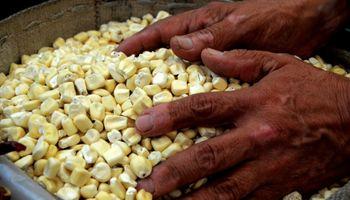 """Alerta global: el """"perturbador"""" estudio que revela la inseguridad alimentaria en el mundo"""