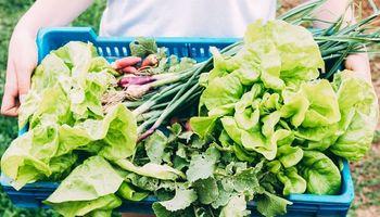 Del campo a la escuela: FAO invita a fortalecer la alimentación