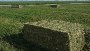 Fuerte incremento de la demanda de fardos de alfalfa de Arabia Saudita