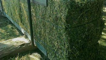Exportaciones argentinas de fardos de alfalfa crecieron más de un 240%
