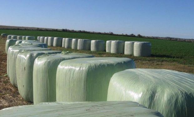 En lo que va de 2015 se declararon exportaciones argentinas de 19.215 toneladas de fardos de alfalfa por un valor FOB de 4,45 millones de dólares.