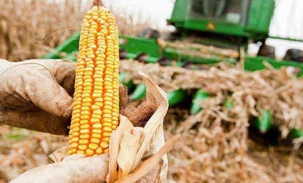 Así cerró el mercado de granos luego de la publicación del informe del USDA