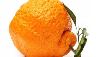 Genius Foods: jóvenes rescatan residuos del agro y los reintroducen en la producción de alimentos