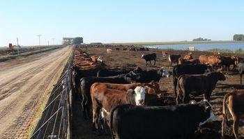 Identificación electrónica del ganado: en qué se encuentra el proyecto oficial