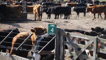 En pleno verano, el ganado también combate el estrés