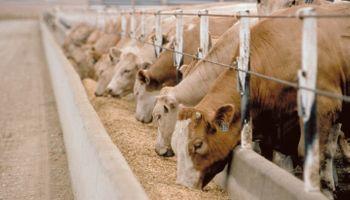 Carne: ¿Qué puede equilibrar la balanza entre consumo y exportación?