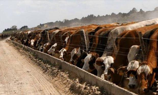 """""""Feedloteros"""" dicen que el mercado valora la calidad de la carne que producen."""