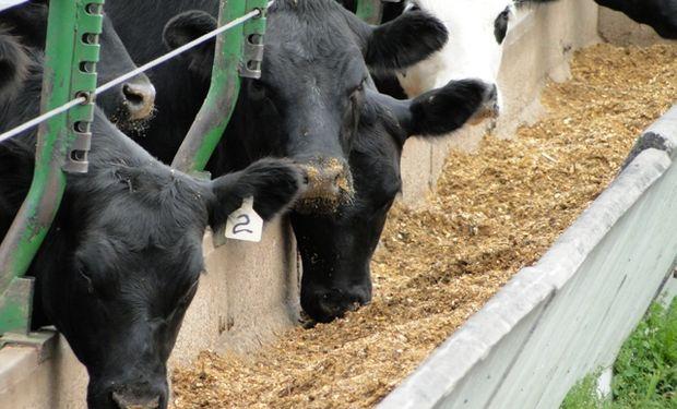 En los feedlots se agregan kilos en función de que el maíz todavía está barato y el valor de la invernada es prohibitivo.