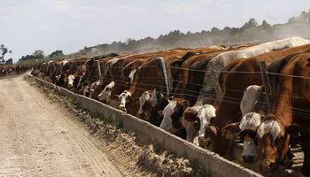 La carne uruguaya está en riesgo