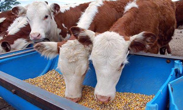 """Carne: """"Un cepo a la exportación puede cambiar el nivel de oferta, pero no en la dirección buscada"""""""