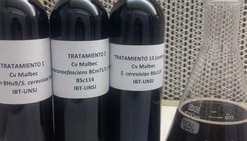 Avanzan con estrategia para adecuar vinos argentinos al paladar de los consumidores