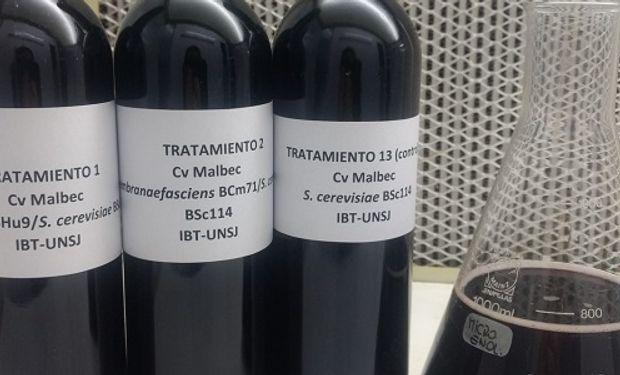 """Además de impactar en la calidad del vino, disponer de estas levaduras """"locales"""" hace más factible que las industrias incorporen la fermentación por etapas."""