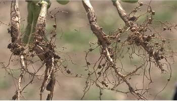 Tres especialistas abordaron el aporte de productos biológicos como complemento de la fertilización