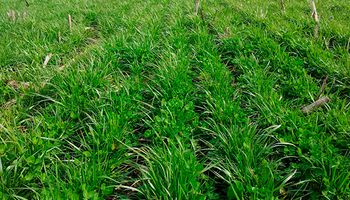 Fertilización: qué, cómo y cuánto se aplica sobre el trigo, el maíz y la soja
