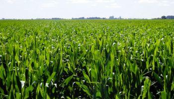 """Estrategias de fertilización: con foco en el maíz """"temprano y tardío"""""""