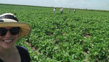 Soja: un grupo de científicos argentinos mejoró la fijación de nitrógeno con un método físico