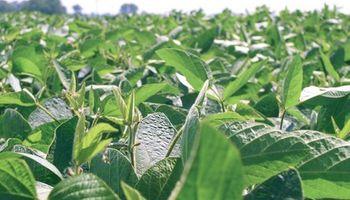 Desarrollan el primer fertilizante foliar específico para la soja argentina