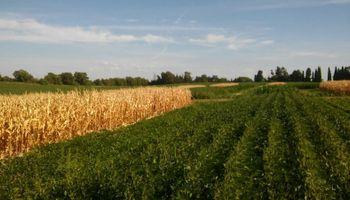 Se cortó la suba de los fertilizantes: cómo impactó sobre la relación de canje de soja y maíz