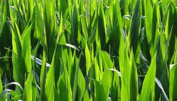 Crece el consumo de fertilizantes