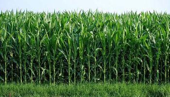 Nuevas tecnologías para la caña de azúcar