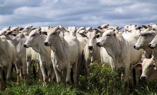 Brasil abre nuevos mercados y exportará carne a Tailandia