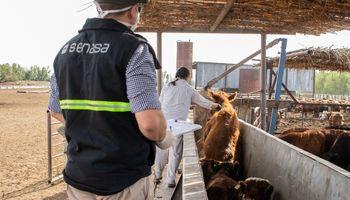 Comienza la segunda campaña de vacunación contra la aftosa de 2020: consejos en la pandemia