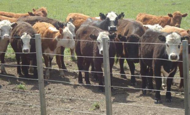 La fiebre aftosa es una enfermedad viral muy contagiosa que afecta a vacas, cerdos y cabras.
