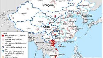 Fiebre porcina y carne ilegal en China: oportunidades para la Argentina