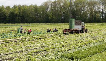 Modalidades contractuales en el Régimen de Trabajo Agrario