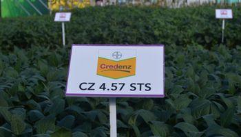FN semillas con un nutrido portfolio en Expoagro 2015