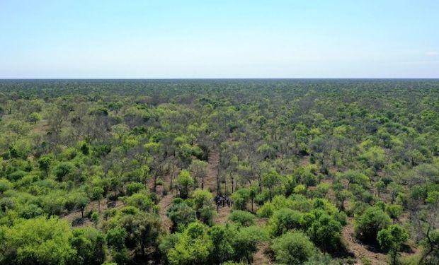 Ganadería regenerativa: un proyecto argentino ganó un certamen global e impactará sobre 75.000 hectáreas