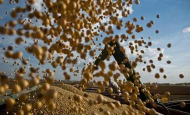 Fondos reducen apuesta contra la soja