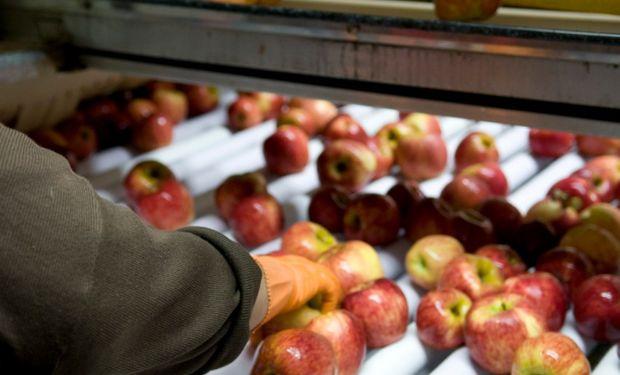 Agroindustria entrega $70 millones a productores de peras y manzanas de Neuquén.