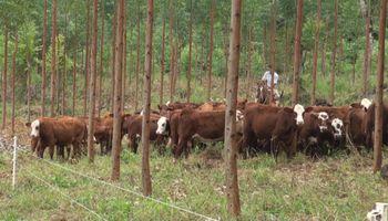 Sistemas foresto ganadero: una opción que aumenta la rentabilidad de la producción