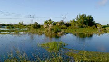 Declaran emergencia agropecuaria en Formosa por inundaciones