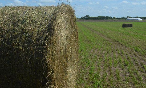 Buenas prácticas para realizar henolaje de alfalfa.